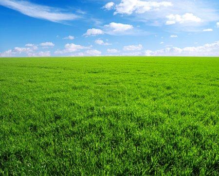Photo pour Champ d'herbe verte et ciel bleu vif - image libre de droit