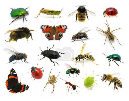 Foto de Conjunto de insectos en blanco - Imagen libre de derechos