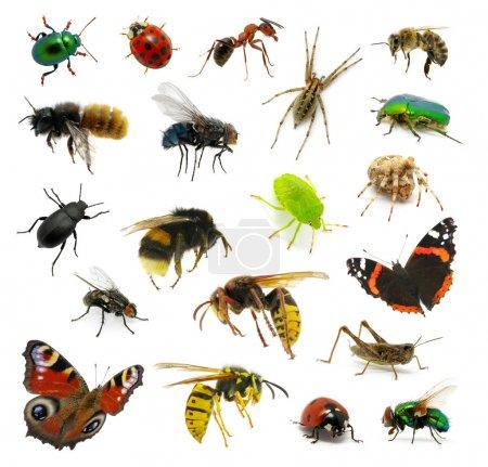 Photo pour Ensemble d'insectes sur blanc - image libre de droit
