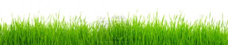 Photo for Green grass on white background - Royalty Free Image