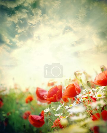 Photo for Poppy flowers in the sky - Royalty Free Image