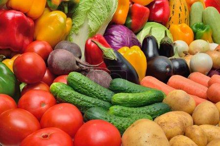 Foto de Cultivo de hortalizas. patatas, pimientos, tomates, pepino, berenjena y otras verduras. - Imagen libre de derechos
