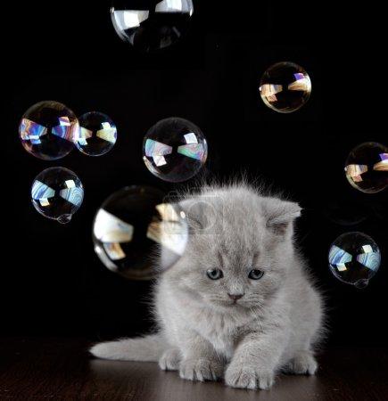 Photo pour Chaton et bulles de savon - image libre de droit