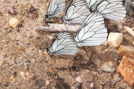 Группа бабочек .