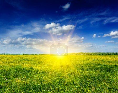 Spring summer background - blooming field meadow
