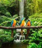 Modrá a žlutá macaw