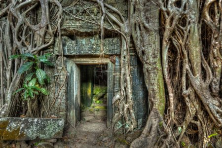 Photo for Travel Cambodia concept background - ancient stone door and tree roots, Ta Prohm temple ruins, Angkor, Cambodia - Royalty Free Image