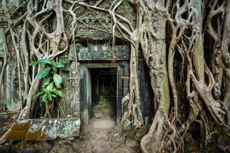 Photo pour Voyage Cambodge concept fond - porte de pierre ancienne et racines des arbres, ta prohm temple ruines, angkor, Cambodge - image libre de droit