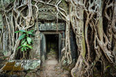 Ancient stone door and tree roots, Ta Prohm temple, Angkor