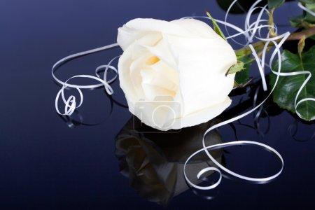 Photo pour Belle rose blanche sur fond noir - image libre de droit