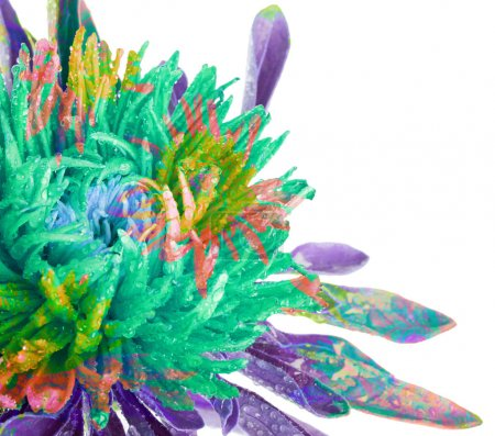 Abstract flower background with splash. Aster...