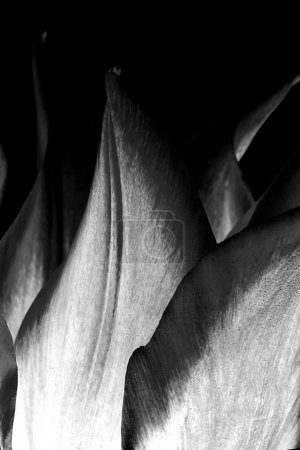 Abstract flower leaves background. Tulips...
