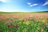 Jarní květinová louka