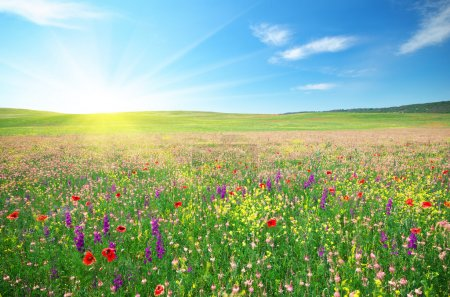 Spring meadow of flowers