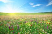 Jarní louka květin