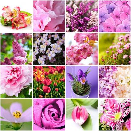 Photo pour Gros plan de bel fleurs lilas et roses collage - image libre de droit