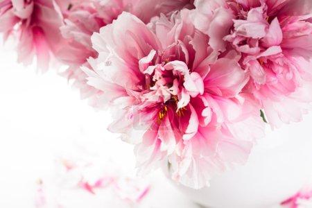 Photo pour Pivoines roses dans un vase isolé sur blanc - image libre de droit