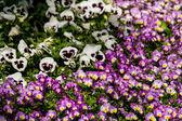Jarní květiny v zahradě