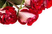 """Постер, картина, фотообои """"розовые розы"""""""
