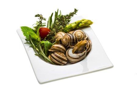 Escargot with asparagus