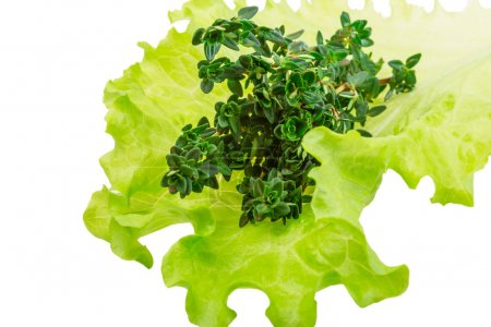 Salad leaves with thyme