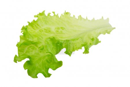 Photo for Salad leaves isolated - Royalty Free Image