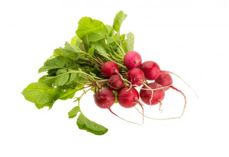 Photo for Fresh radish with leaves isolated - Royalty Free Image