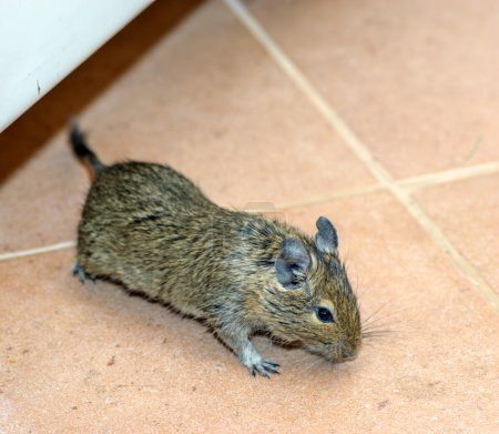 Home mouse