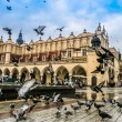 A lot of doves in Krakow old city. Market Square. ...