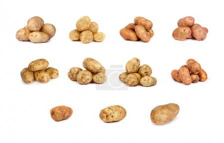 Set of potatoes isolated on white