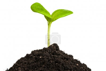 Photo for Heap dirt with a green plant sprout isolated on white background - Royalty Free Image