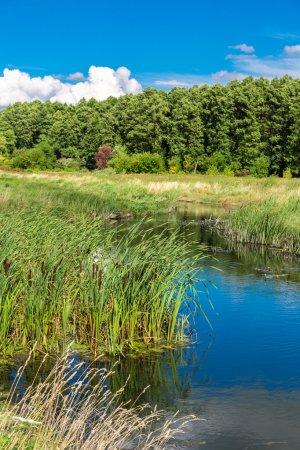 Summer landscape with river