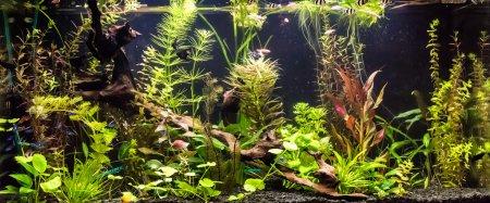 Ttropical aquarium with fishes