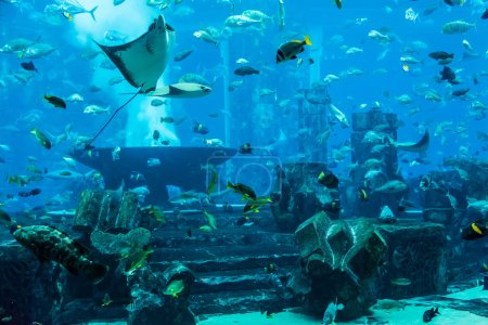 Photo pour Photo d'un poisson tropical sur un récif corallien dans l'aquarium de Dubaï. Poisson Stingray - image libre de droit