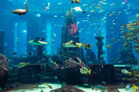 Photo pour Photo d'un poisson tropical sur un récif corallien dans l'aquarium de Dubaï - image libre de droit