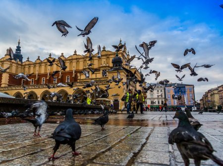 Photo for Lot of doves in Krakow old city. Market Square. Poland - Royalty Free Image