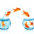 Goldfish jumping out of the aquarium isolated on w...