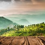 Landscape of the tea plantations in India, Kerala ...