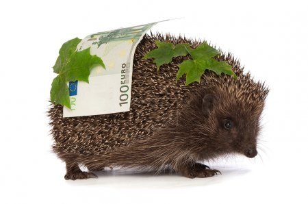 Photo for The hedgehog in motion hastens home from the bank carrying percent fifty euro profit - Royalty Free Image