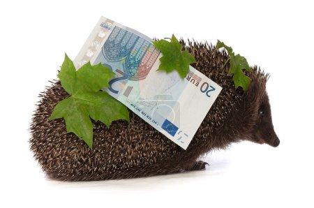 Photo pour Le hérisson en mouvement s'empresse de rentrer de la banque portant pour cent vingt euro bénéfice - image libre de droit