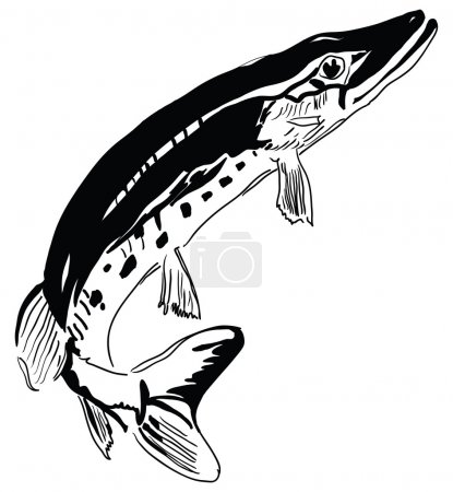 Pike - predator inhabits freshwater environments. ...