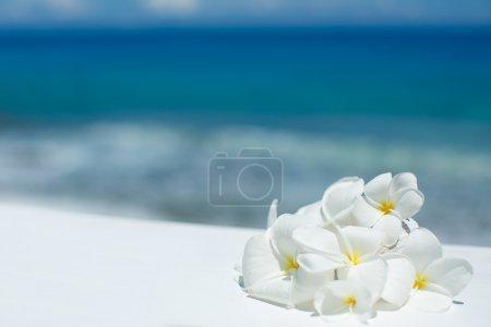 Photo pour Fleurs de jasmin tropicales (Plumeria) dans le contexte de l'océan Indien - image libre de droit