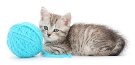 Small funny kitten and clew of thread . Isolated o...