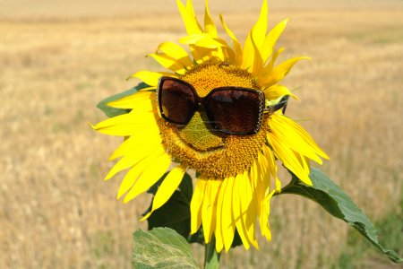 Photo for An image of a sunflower in sunglasses - Royalty Free Image
