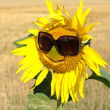 An image of a sunflower in sunglasses...