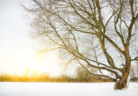 Photo for Winter river and trees in winter season - Royalty Free Image