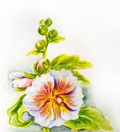 Photo pour Fleurs de rose trémière. Aquarelle - image libre de droit