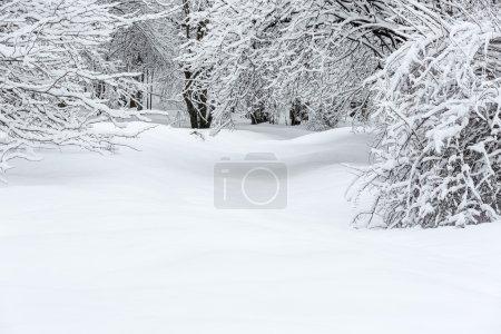 Photo pour Paysage de hêtres enneigés - image libre de droit