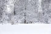 Zimní zasněžené krajiny