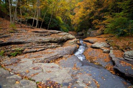 Photo pour Ruisseau de roches forestières d'automne dans les bois avec feuillage d'arbres jaunes - image libre de droit